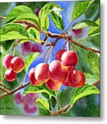 Red Crab Apples With Background Metal Print