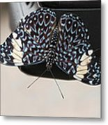 Red Cracker Butterfly Metal Print