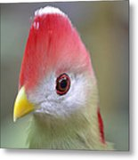 Red Crested Turaco Metal Print