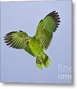 Red-crowned Parrot Metal Print