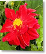 Red Dahlia Flower Metal Print