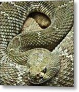 Red Diamond Rattlesnake 3 Metal Print
