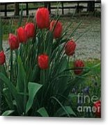 Red Dynasty Red Tulips Metal Print