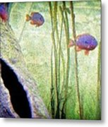 Red Eared Bluegills Metal Print by Rosemarie E Seppala