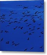 Red Eye Flight Metal Print