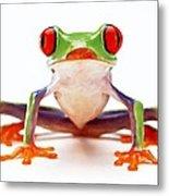 Red-eye Tree Frog 2 Metal Print by Lanjee Chee