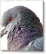 Red-eyed Pigeon Metal Print