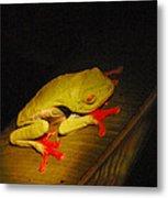 Red-eyed Tree Frog Metal Print