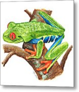 Red-eyed Treefrog Metal Print by Cindy Hitchcock