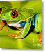 Red-eyed Treefrog Metal Print