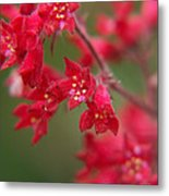 Red Fairy Trumpets Metal Print