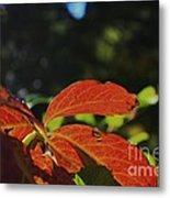 Red Fall Leaves Close Up Metal Print