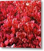 Red Fall Metal Print
