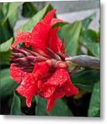 Red Flower After The Rain Metal Print