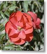 Red Flower II Metal Print