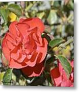 Red Flower IIi Metal Print