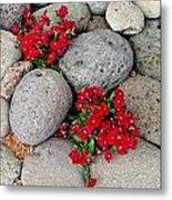 Red Flower In Rocks Metal Print