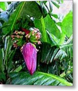 Red Flower Of A Banana Against Green Leaves Metal Print