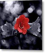Red Flower Petals Metal Print