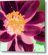 Red Flower - Photopower 256 Metal Print