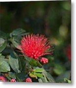 Red Flower Spraying Metal Print