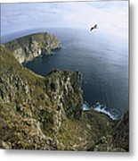 Red-footed Booby And Swallow-tailed Metal Print