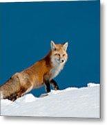 Red Fox Metal Print by Gary Beeler