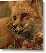 Red Fox In Autumn Leaves Stalking Prey Metal Print