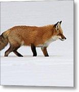 Red Fox In Deep Snow Metal Print