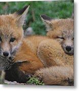 Red Fox Kit Stays Alert Metal Print