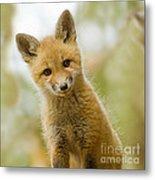 Red Fox Kit Up Close Metal Print