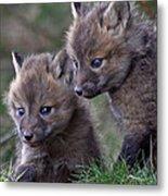 Red Fox Kits Metal Print