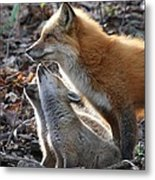 Red Fox With Kits Metal Print