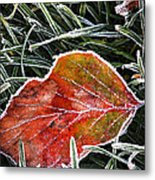 Red Frosty Leaf On Frozen Ground Metal Print