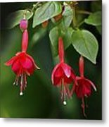 Red Fuchsia Metal Print