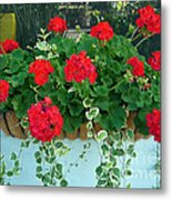 Red Geranium 1 Metal Print