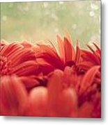 Red Gerbera With Green Background Metal Print