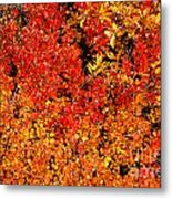 Red-golden Alpine Shrubs Metal Print
