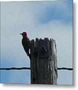 Red-headed Woodpecker Metal Print