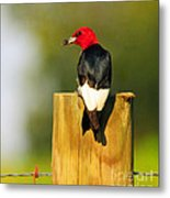 Red-headed Woodpecker Metal Print
