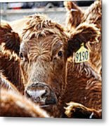 Red Heads On The Ranch Metal Print