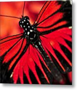 Red Heliconius Dora Butterfly Metal Print by Elena Elisseeva