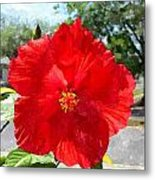 Red Hibiscus In The Neighborhood Metal Print