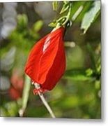 Red Hibiscus Metal Print
