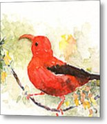 I'iwi - Hawaiian Red Honeycreeper Metal Print
