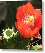 Hot Red Cactus Metal Print