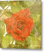 Red Hot Rose Metal Print