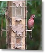 Red House Finch Metal Print