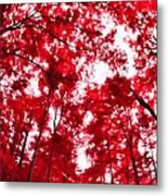 Red I Metal Print
