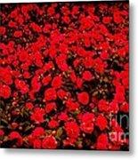 Red Impatiens Flowers Metal Print